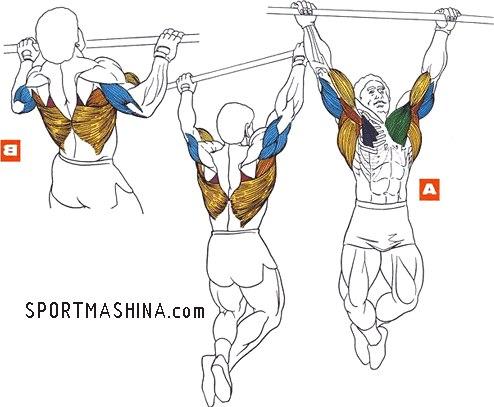 Вот видео для вдохновения.  Мышцы работающие при подтягивании.