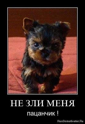 http://cs11313.userapi.com/v11313577/5f3/6NklLUg47C0.jpg