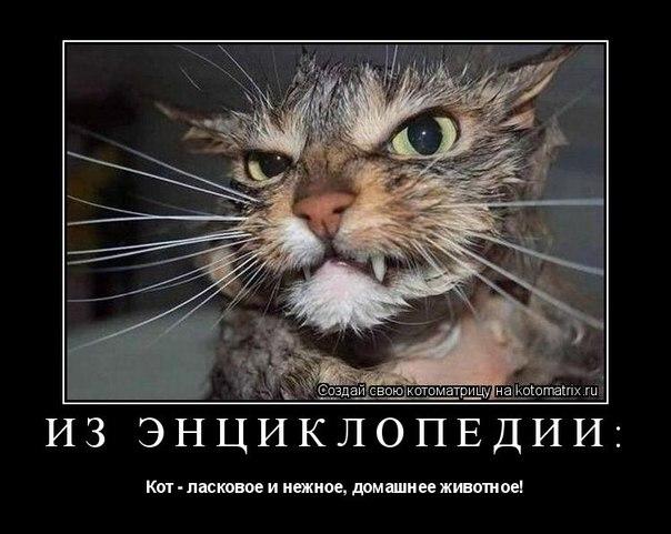 http://cs11321.vk.me/v11321721/806/F2kCnLy32k4.jpg