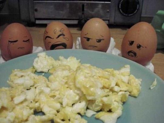куриные яйца в шоке