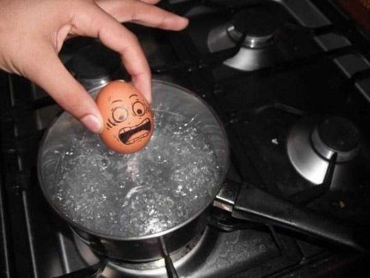 яйцо в шоке