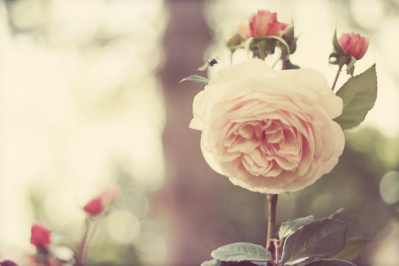 Цветы ванильные картинки 3