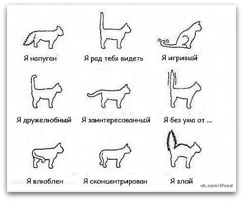 http://cs11331.vkontakte.ru/u1289152/-5/x_14ca4575.jpg