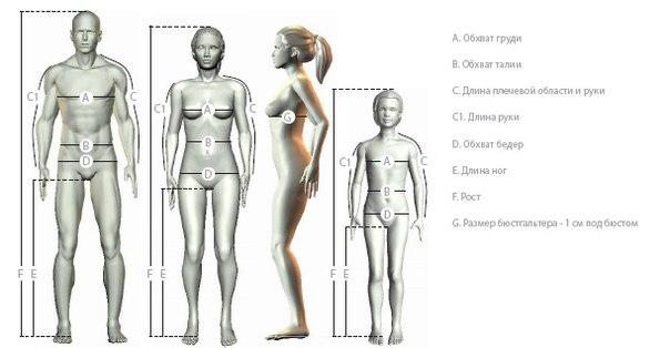 Размеры женской груди фото