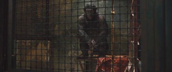 обезьяна в клетке