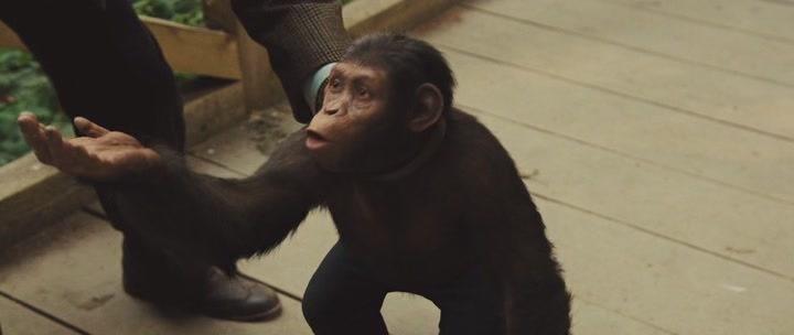 обезьяна просит разрешение
