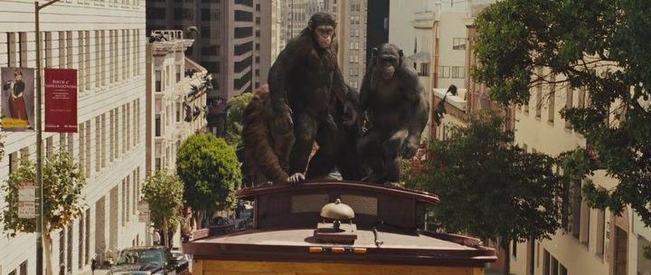 обезьяны на трамвае