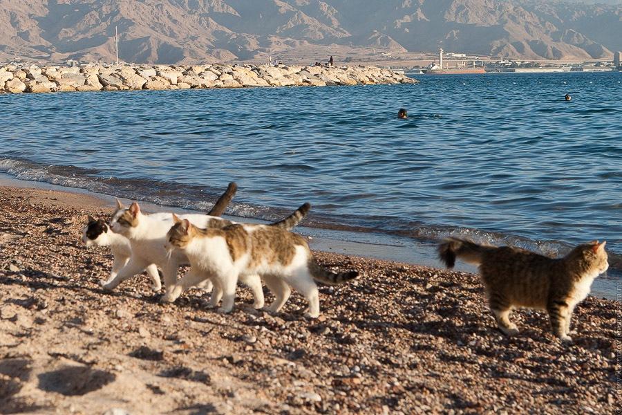 кот Кошкин море коты кошки