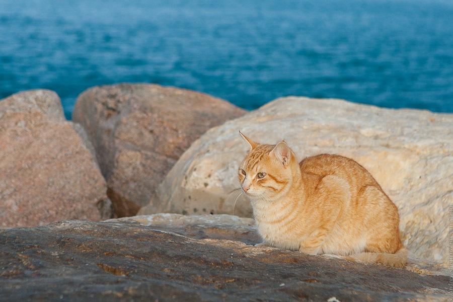 кот Кошкин море