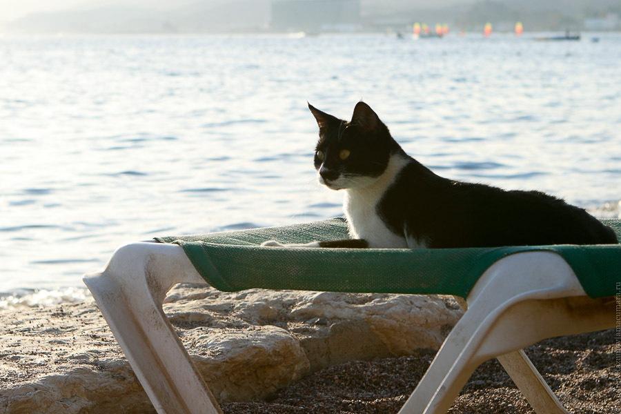 кошка море