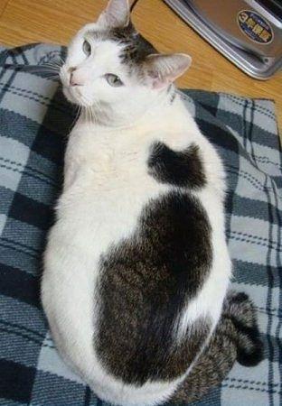 Окрас кота.  Надеюсь, не фотошоп!