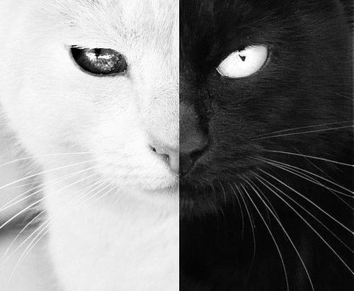 вышивка чернобелая кошки