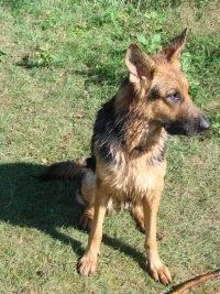 Djessica (моя любимая собака), 2 июля , Дрогичин, id117949811