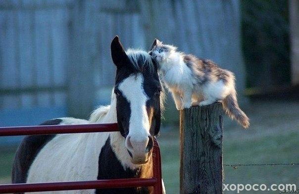 Немного о животных) 4LdaBZu0kxc