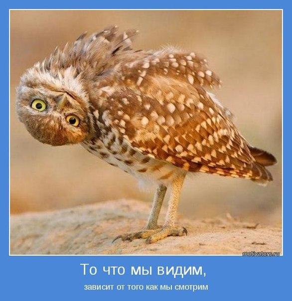 Секулярный гуманизм   ВКонтакте