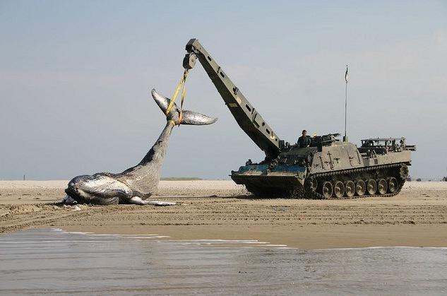 Кто кого поборет слон кит танк