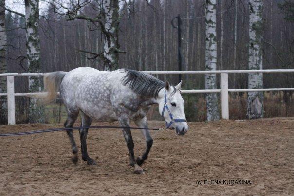 Прогулки на лошадях ТОКСОВО!   ВКонтакте