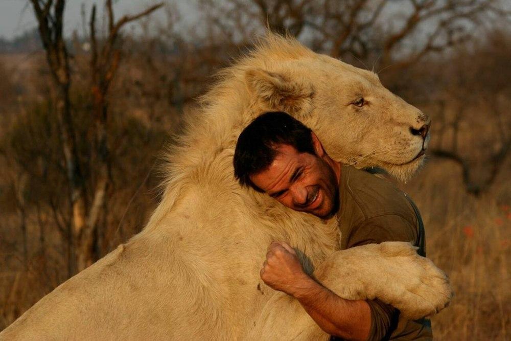 Как разрывают отношения мужчины львы