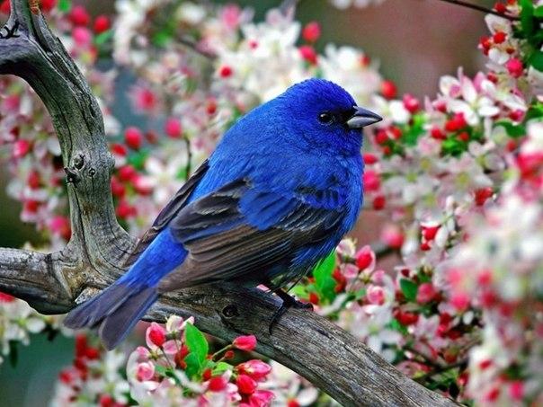 В цитатник или сообщество.  Природа. в цитатник. красивые фотографии птиц.  Сохранить как...