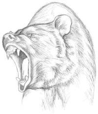 Медведь-людоед внешне схож с обычным медведем, но существенно отличается...
