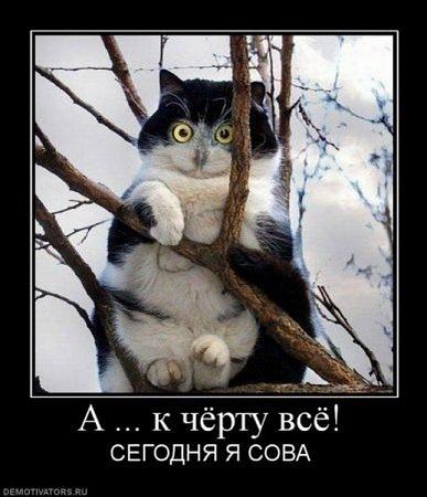 http://cs11433.vk.me/u18950778/139646857/x_7a359b43.jpg