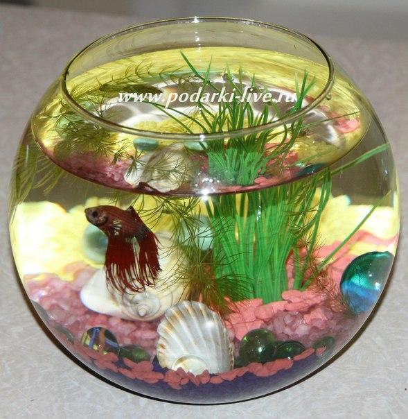 Маленький аквариум фото 2