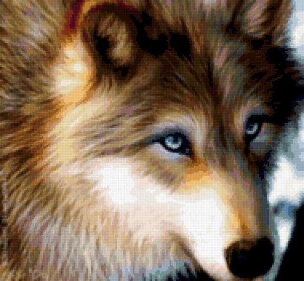 Овцу за внешность волк за содержание