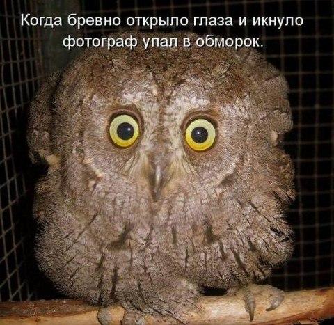 http://cs11451.vk.me/u71985370/-14/x_5f8d6011.jpg