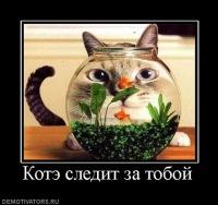 Элтуран Вахабов, 4 апреля 1987, Миасс, id116794424