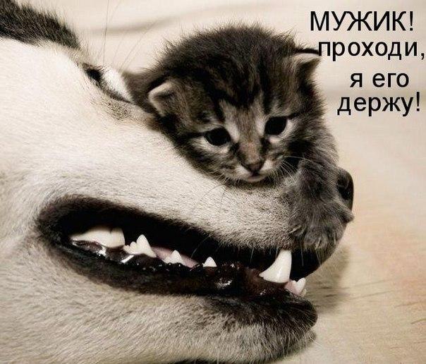 Смішні тварини