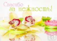 Вова Сотник, 9 августа 1994, Железноводск, id168649358