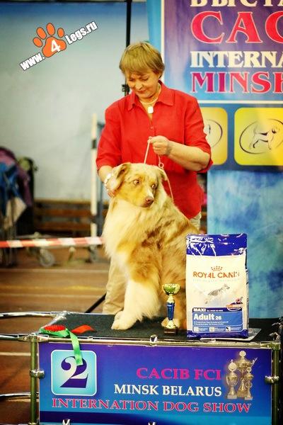 Выставочные успехи наших собак - 2 X_be314017