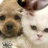 Домашные животные, помощь, приют. Ростов-на-Дону