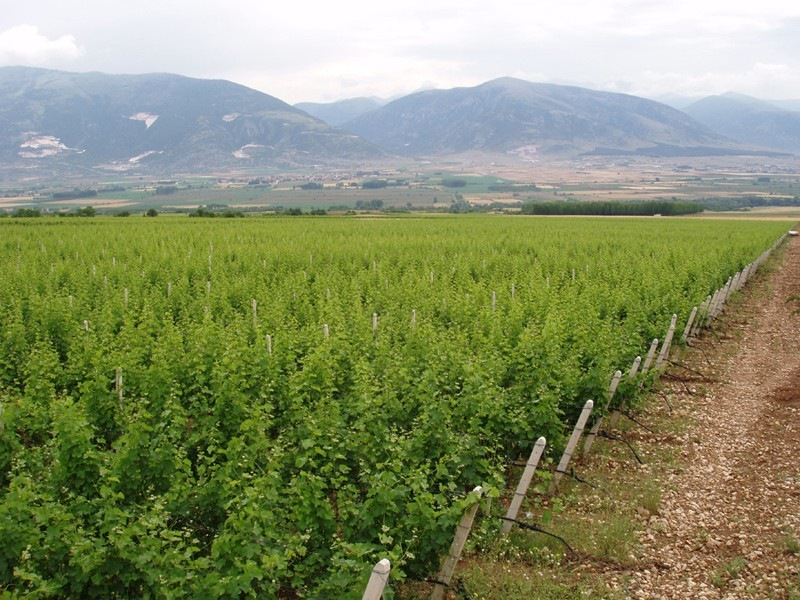 Виноградники Costa Lazaridi