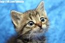 Отдам в хорошие руки замечательных котят.