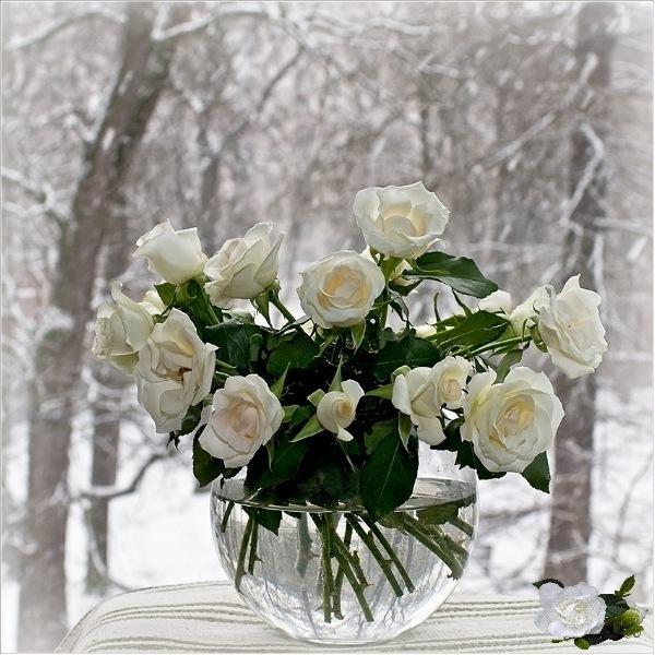 http://cs11473.vkontakte.ru/u63927613/-14/x_5f00beee.jpg