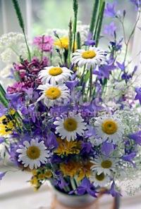 Полевые цветы день рождения фото