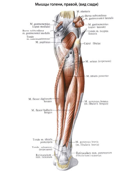 горит икроножная мышца