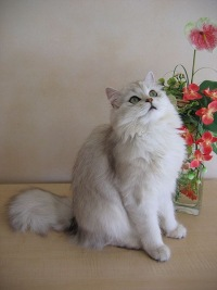 Валентина Боровых, 28 мая , Пермь, id127263696