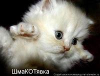 Катюша Алексеева, 17 января , Москва, id173349559