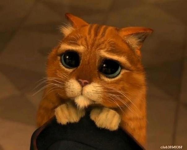 Кот в сапогах (мультфильм, 2 11) — Википедия