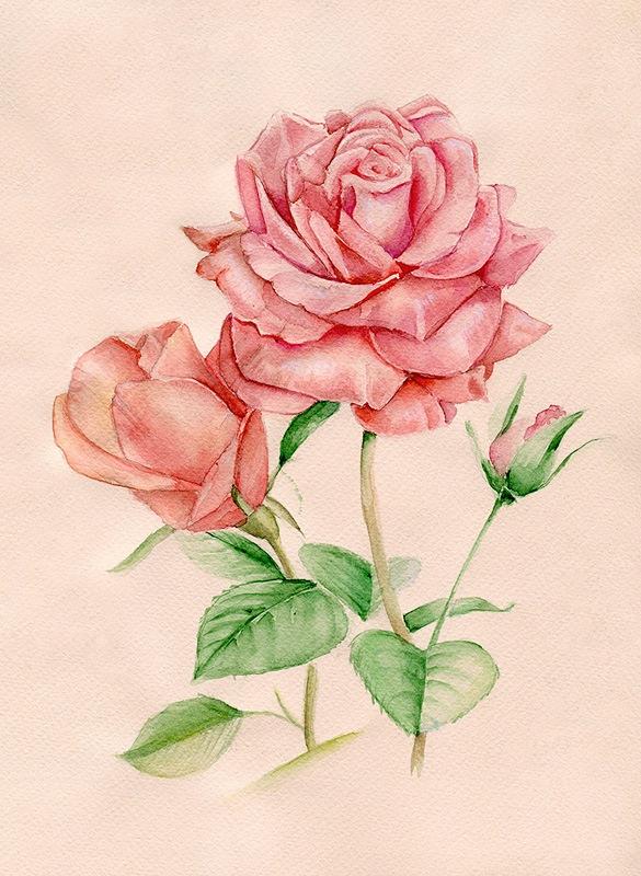 нарисовать розу акварелью