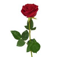 Состав.  Цвет роз вы можете выбрать сами.  Оформите заказ, указав количество роз, наш менеджер перезвонит вам и...