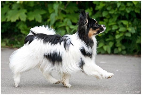 hills или royal canin