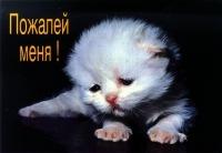 Николай Слава, 1 января 1990, Балаково, id145065646