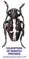 Coleoptera of Saratov Province and Volga Region