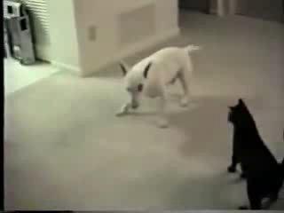 Kot za psom