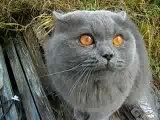 на 5-ой секунде кот говорит открой глаза!!!