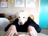 Челопёс завтракает :DD