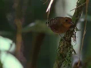 BBC: По странам и континентам. Дикая Африка / ВВС: Wild Africa (2001 г.) Фильм 5 / KINObars.ru